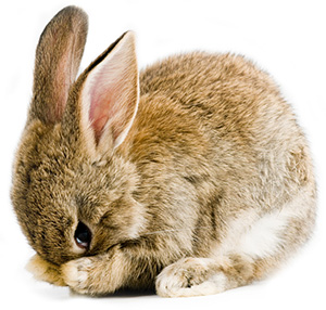 shy-bunny